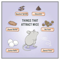 How To Remove Mice From Your Attic