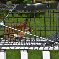 Ways To Keep Squirrels Out Of Your Attic